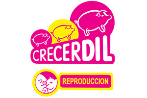 producto-17